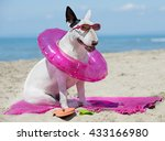Bull Terrier Standing On The...