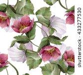 watercolor hellebore flower... | Shutterstock . vector #433277530