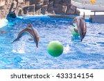 a cute dolphins during a speech ... | Shutterstock . vector #433314154