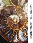 Small photo of Prehistoric fossilized mollusk called ammonite, an extinct marine animal.