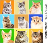 cats portraits on bright... | Shutterstock . vector #433478260