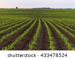 corn farm field | Shutterstock . vector #433478524