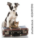 Stock photo puppy and kitten with suitcase 433499590