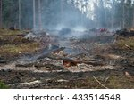 Forest Felled Trees And Burned...