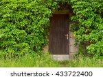 Wooden Basement Door Overgrown...