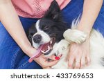 Stock photo happy dog border collie with her owner 433769653