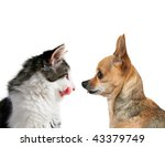 a side view of a tiny chihuahua and a kitten - stock photo