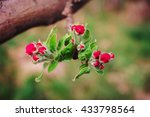 Pink Bud Spring Fruit Tree On ...