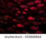 red golden fish | Shutterstock . vector #433868866