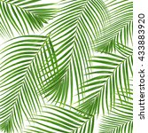 green leaves of palm tree... | Shutterstock . vector #433883920