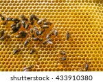bees swarming on a honeycomb | Shutterstock . vector #433910380
