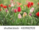 field of beautiful blooming... | Shutterstock . vector #433982920
