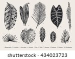 set leaf. exotics. vintage... | Shutterstock .eps vector #434023723