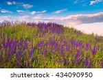 wildflowers meadow under blue... | Shutterstock . vector #434090950
