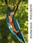 woman laying in hammock and... | Shutterstock . vector #434128234