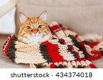 cute curious ginger cat sleeps... | Shutterstock . vector #434374018