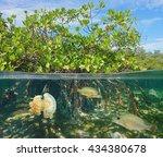 Mangrove Above And Below Water...