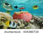 colorful fishes with a sea...   Shutterstock . vector #434380720