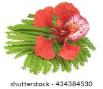 royal poinciana bloom with leaf ... | Shutterstock . vector #434384530