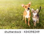 Stock photo cute kitten and puppy together in a field of green grass and yellow wild flowers with copy space 434398249