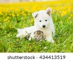 Stock photo cute puppy embracing tabby kitten on a dandelion field 434413519