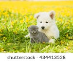 Puppy Embracing Kitten On A...