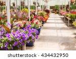abundance of colorful flowers... | Shutterstock . vector #434432950