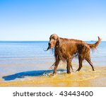 Stock photo wet dog 43443400