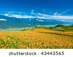 Daylily In The Mountain With...