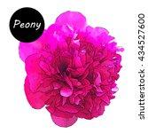 luxurious pink peony.hand...   Shutterstock .eps vector #434527600
