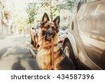 german shepherd dog with leash... | Shutterstock . vector #434587396