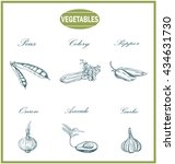 vegetables sketch set.vector... | Shutterstock .eps vector #434631730