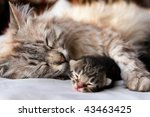Cat And Kitten Hug And Sleep I...