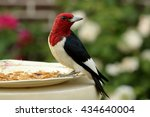 Red Headed Woodpecker At The...