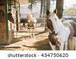 Horse In Front Of A Barn