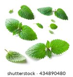 Lemon Balm  Melissa Officinali...