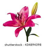 lily flowers isolated on white... | Shutterstock . vector #434894398