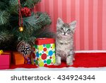 gray tabby kitten next to a... | Shutterstock . vector #434924344