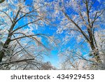 frozen trees in winter with... | Shutterstock . vector #434929453