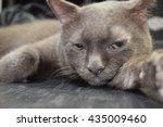 sleeping cat | Shutterstock . vector #435009460