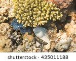 moray eel. marine life in the... | Shutterstock . vector #435011188