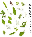 various fresh herbs from the... | Shutterstock . vector #435035338