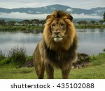Large African Male Lion At Lak...