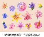 set of flowers head in... | Shutterstock .eps vector #435262060