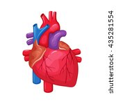 human heart anatomy. medical... | Shutterstock .eps vector #435281554