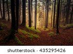 Mystic Forest On A Foggy And...