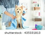 Stock photo cute dog at groomer salon 435331813