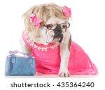 female english bulldog dressed... | Shutterstock . vector #435364240