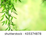 green leaves background | Shutterstock . vector #435374878