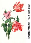 watercolor tulips botanical... | Shutterstock . vector #435406150